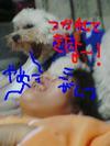 Pa0_0409_yamei