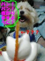 Pa0_0487atarimasuyouni