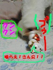 Pa0_0834kurae