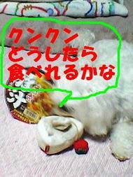 080605_184311_kunkunedited