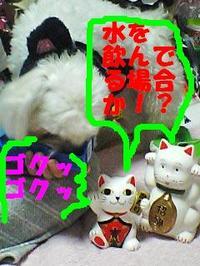 080621_183407_gokugokuedited
