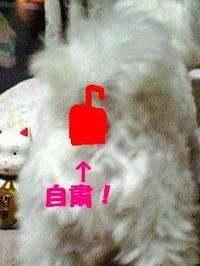 080712_190503_jisixyukuedited