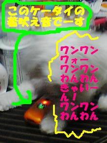 080730_185801tiyakuhoe