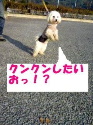 081114_083501_kunkunedited