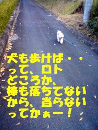081114_142801_arukebaedited