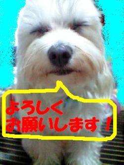 091114_18260001_yorosikuedited