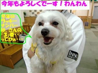Cimg0459_kotoyoroedited