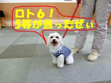 Cimg0425_gotou
