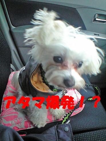 Ca3a0763_bakuhatuedited