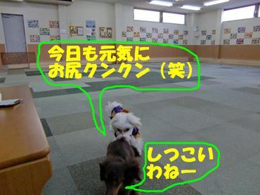 Cimg1201_kunkunedited