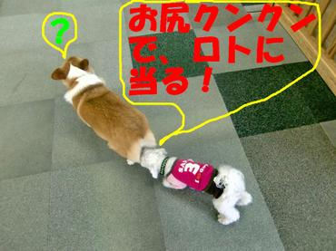Cimg1794_kunkunedited