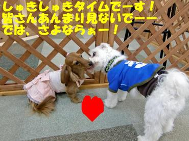 Cimg2100_hato