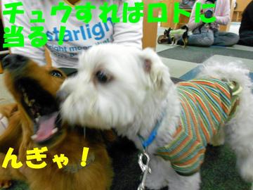 Dscn1167_ngyaedited