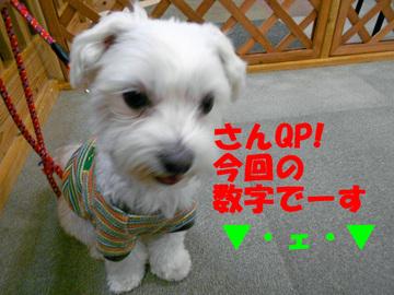Dscn1195_suujiedited