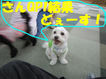 Img_0133suuji