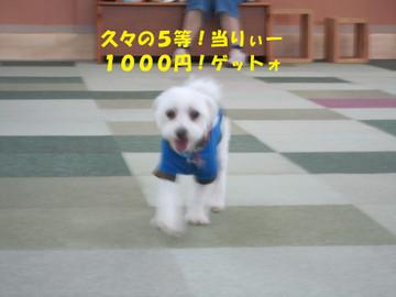 Img_0032hisibisa