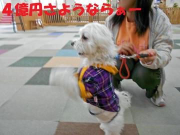 Dscn2901_sayonaraedited