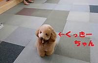 Dscn3629kuxtukitiyan_2