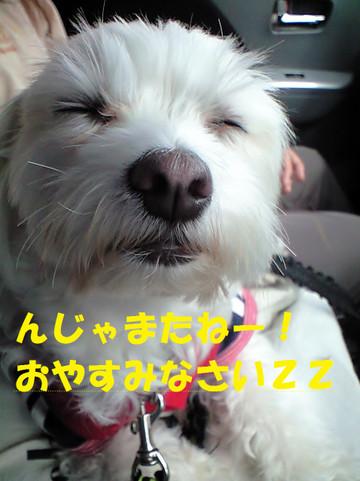 Ca3a2538oyasumi