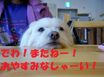 Dscn5891oyasumi