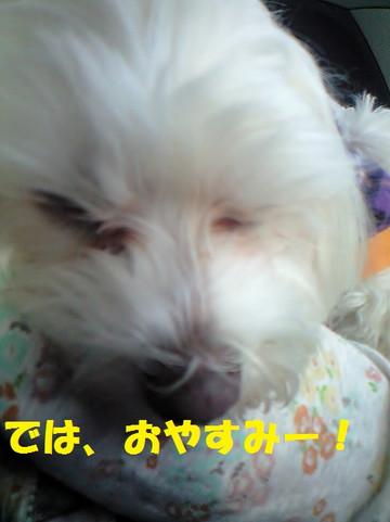 Ca3a2701oyasumi