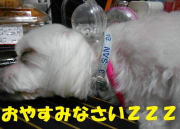 Dscn5145oyasumi