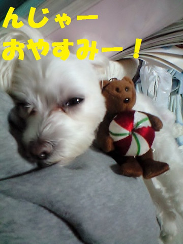 Ca3a2761oyasumi