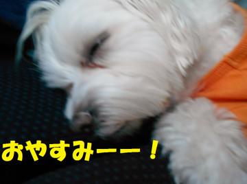 Dscn6420oyasumi