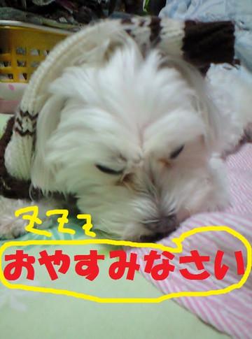 Ca3a2849oyasumi