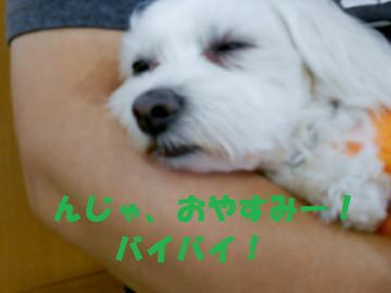 Dscn4107oyasumi