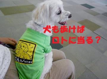 Dscn6673ataru