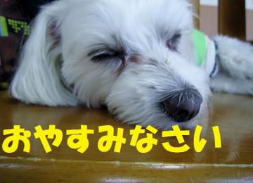 Img_0270oyasumi
