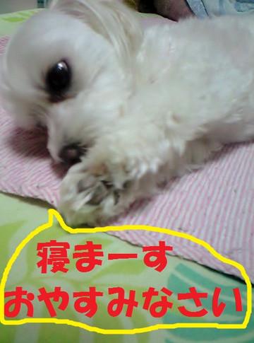Ca3a2948oyasumi