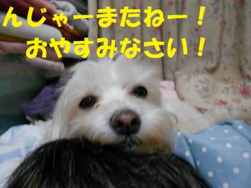 Dscn6593oyasumi