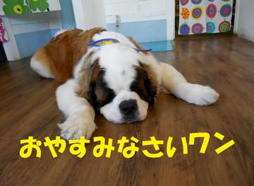 Dscn6594oyasumi
