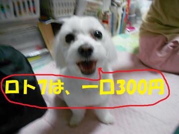 Dscn6637sannhyaku