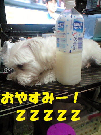 Ca3a3045oyasumi