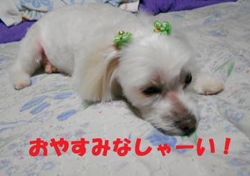 Dscn7100oyasumi