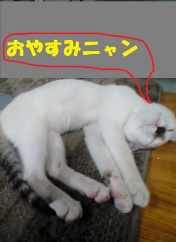 Ca3a3163oyasuminyan