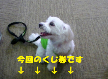 Pic_0098kujiken