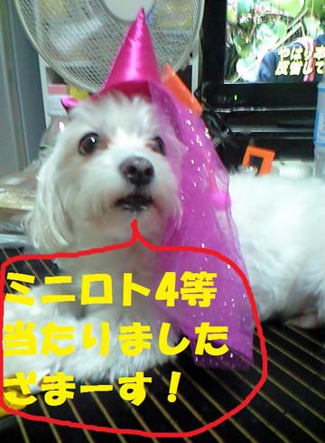 Ca3a3239yontouzamasu