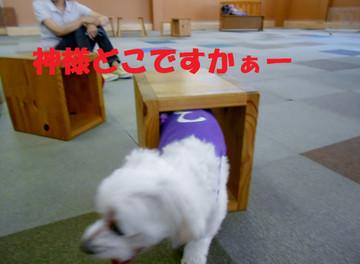 Dscn7165dokodesuka_2