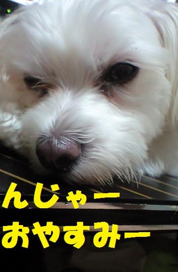 Ca3a3221njyaoyasumi