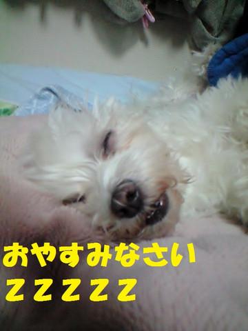 Ca3a3296oyasumi