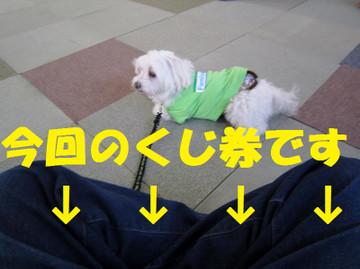 Img_0411yajirusi
