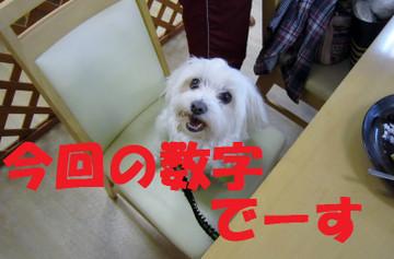 Img_0428suujidesu