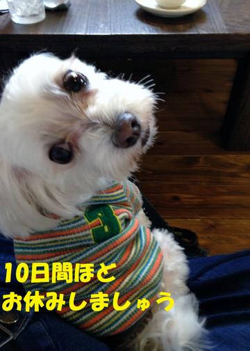 20131109_123152oyasumi
