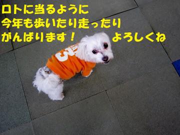 Img_0546yorosiku