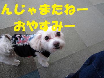 Img_0762oyasumi